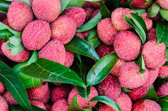 Close-up of red fresh Lychee fruits Royalty Free Stock Images