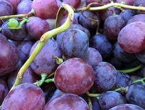 Close up of red grapes Stock Photography