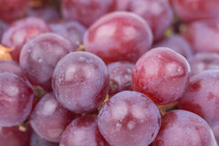 Close up red grapes Stock Images