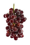Close up of red grapes on white background Stock Images