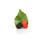 Close up red mulberry on white background Royalty Free Stock Images