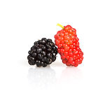 Close up red mulberry on white background Stock Photos