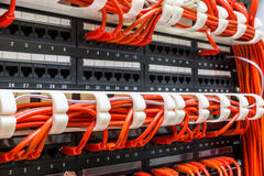Close up of red network cables connected to switch Royalty Free Stock Images