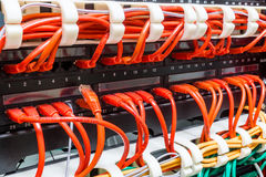 Close up of red network cables connected to switch Stock Images