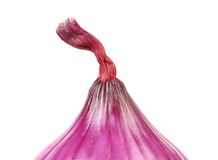 Close up of red onion top. Stock Photography