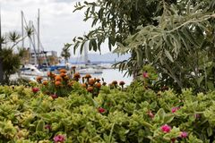 Close up of red and orange flowers with boats in the background stock image