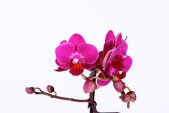 Close up colorful orchid flowers vector illustration