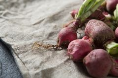 Close-up of red radishes on burlap. Close-up of red radishes on brown burlap Royalty Free Stock Image