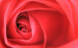 Close-up of red rose Stock Image