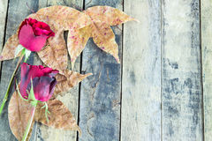 Close up red rose and dry leaves on a wooden background Royalty Free Stock Photo