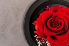 Close up of red rose royalty free stock images