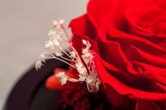 Close up of red rose stock photography