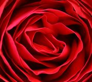 Close up of red rose petal. Stock Images