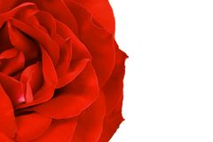 Close up of red rose petal. Background. Royalty Free Stock Photography
