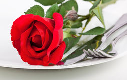 Close up of red rose, plate and cutlery Royalty Free Stock Images