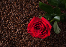Close up of red rose on roasted coffee beans Royalty Free Stock Photos