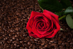 Close up of red rose on roasted coffee beans Stock Image