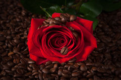 Close up of red rose on roasted coffee beans Stock Photography