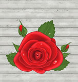 Close-up red rose for Valentine Day on wooden back Stock Photo
