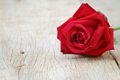 Close up of red Rose on wooden. Valentine's day, anniversary and congratulations background. Stock Photos
