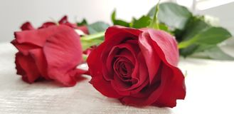 Close up of red roses on white table royalty free stock photos