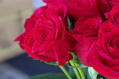 Close up of red roses and water drops. Stock Images