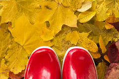 Close up of red rubber boots on autumn leaves. Footwear, autumn and season concept - close up of red rubber boots on fallen yellow autumn leaves stock photo
