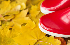 Close up of red rubber boots on autumn leaves Royalty Free Stock Photos