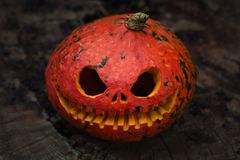 Close up of red scary and angry pumpkin with big eyes and tooth looking and smiling at camera. royalty free stock image
