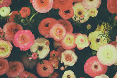 Close up of of red spring flowers. top view photo stock images