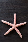 Close-up of red starfish Stock Photos
