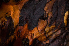 Close up on red tree bark. Structure Stock Photos
