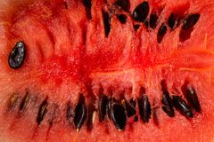 Close up red watermelon Royalty Free Stock Image