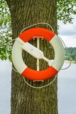 Close up of a red and white lifebuoy hanging on an oak tree by the water. Royalty Free Stock Photos