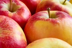 Close-up of red yellow apples with apple stalk. Close-up of multiple red yellow sweat soft organic apples with apple stalk Royalty Free Stock Image