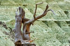 Close up of remnants of dead tree Royalty Free Stock Photo
