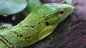 Close-up of Reptile Stock Photo