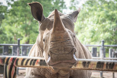 Close up of rhino Stock Photography
