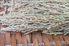 Close-up of rice grain . Royalty Free Stock Photos