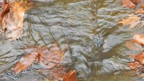 Close up of ridges of hard rock, oak leaves & clear creek water below Mash Fork Waterfalls on Camp Creek. stock footage
