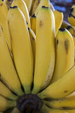 Close-up of ripe bananas Royalty Free Stock Image