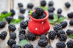 Close-up of ripe blackberries in a red dotted bowl between dispersed berries royalty free stock photo