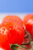 Close up ripe cherry vine tomatoes Royalty Free Stock Images