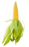 Close-up ripe corn Stock Photos