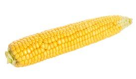 Close-up ripe corn Royalty Free Stock Photos