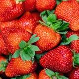 Close-up ripe fresh tasty organic strawbery backround. Fresh red berry wallpaper. Strawberry food fruit background juicy sweet healthy freshness green closeup stock photography