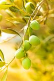 Close-up of ripe green olives Royalty Free Stock Photos