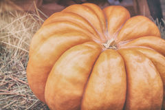 Close-up ripe large ribbed pumpkin on straw, vintage colours. Rustic autumn, fall background. Thanksgiving Day concept Stock Photography