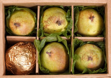 Close up of ripe pears gift wrapped in open box for the holiday Stock Photography