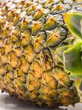 Close-up of ripe pineapple peel with stiff green leaves in the foreground. Close-up of ripe pineapple peel with stiff green leaves in the foreground, on white Stock Image